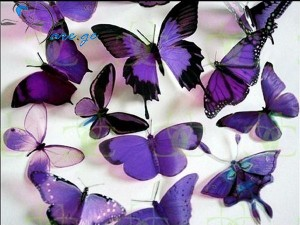 Purple-Butterflies-butterflies-17473487-1024-768